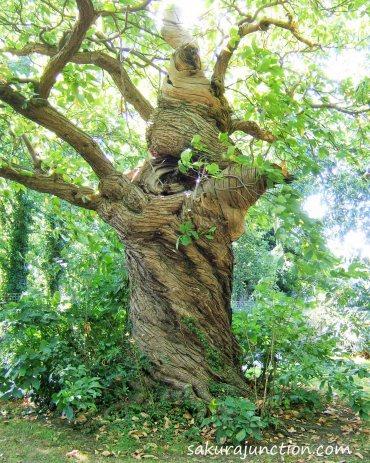 Tree in shape