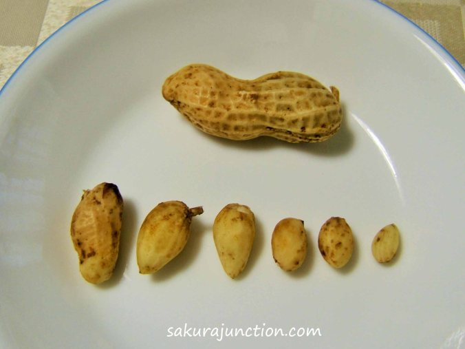 Peanuts lined up