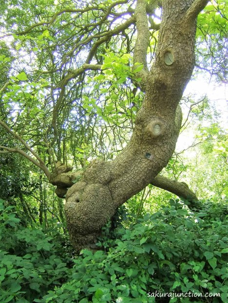 Belly Tree