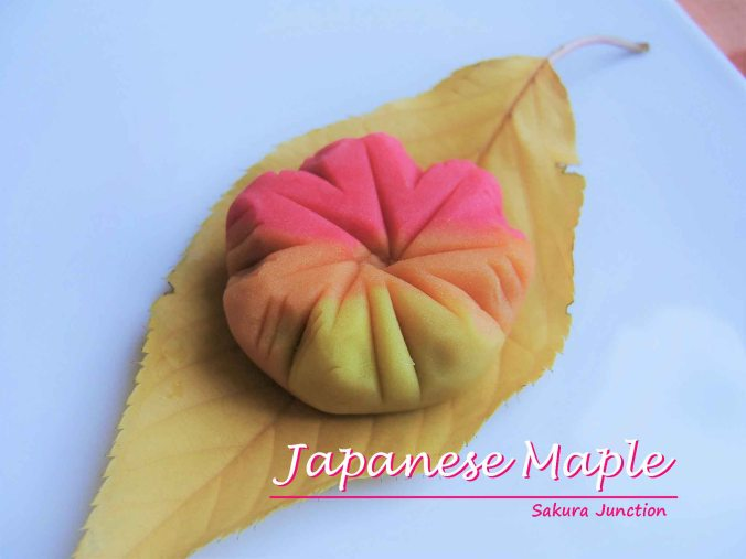 japanese-maple-one
