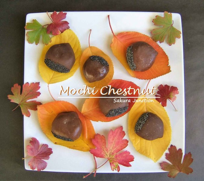 mochi-chestnut-in-autumn-colour