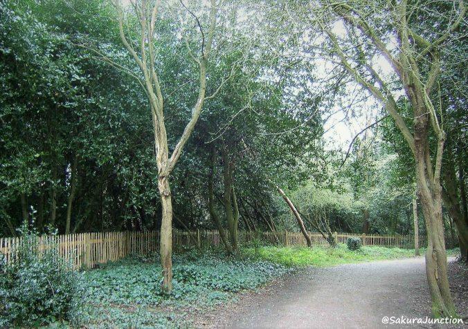 Holland Park2
