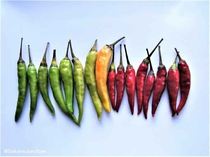 Chilli-Rainbow2