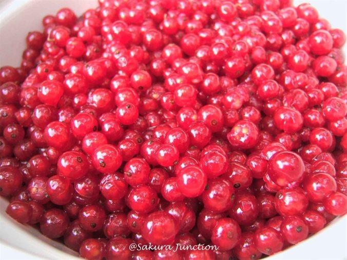 Redcurrants 4
