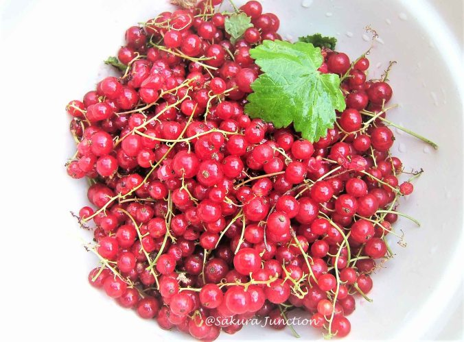 Redcurrants 6