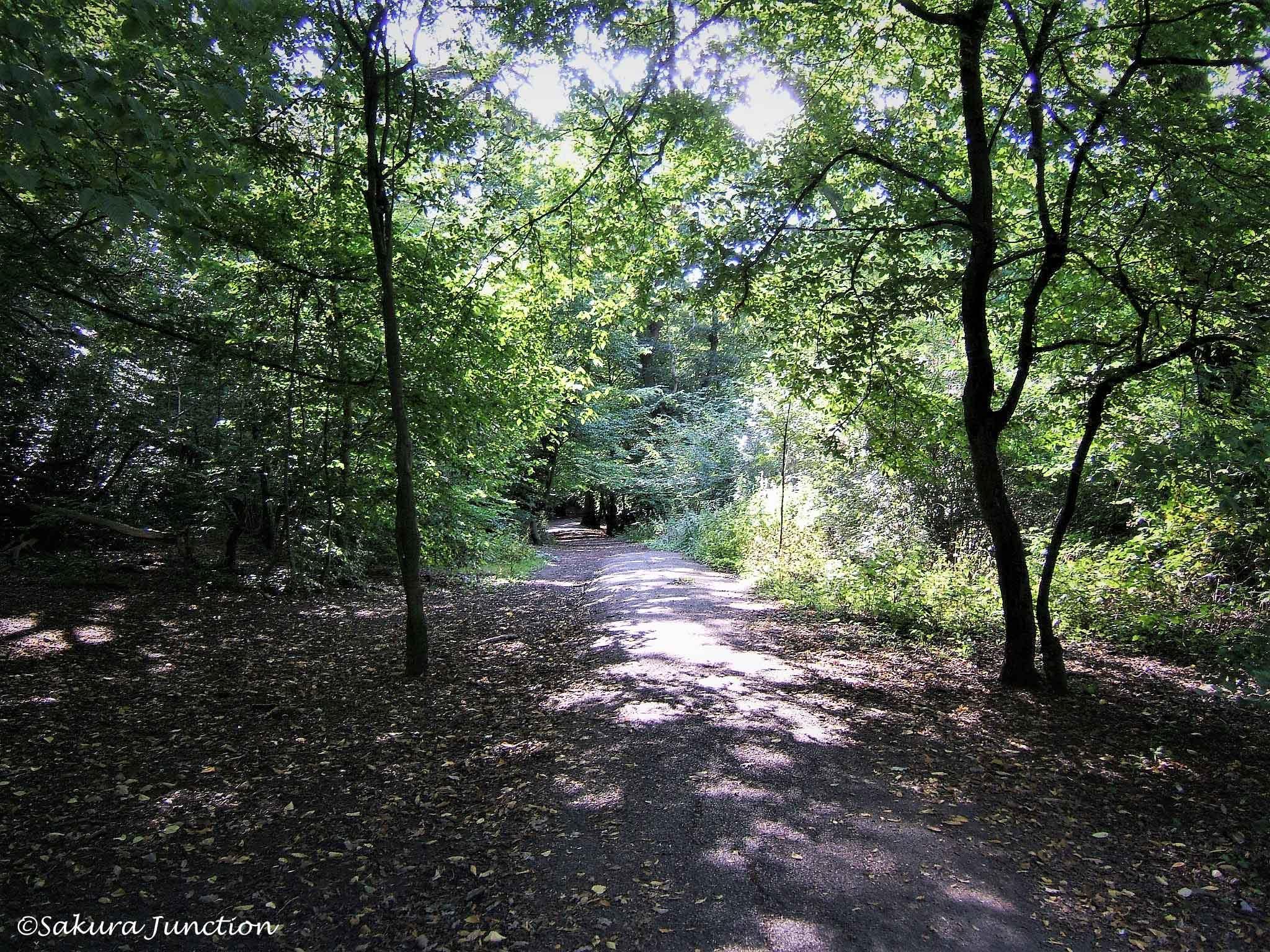 Queens Wood2