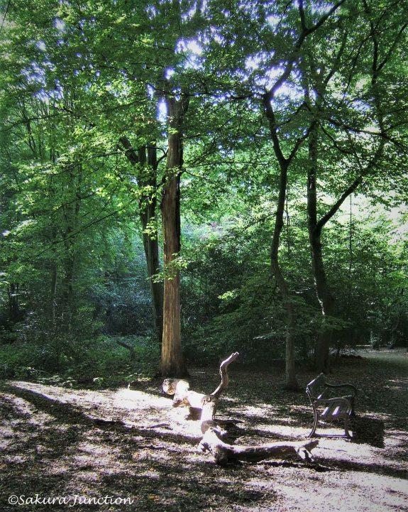 Queens Wood3