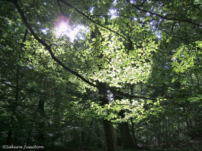 Queens Wood4