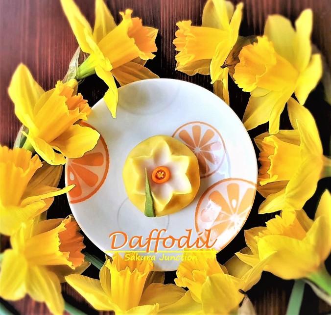Daffodil 11-3