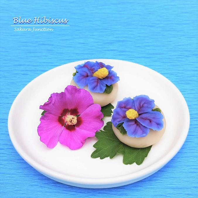 Blue Hibiscus6
