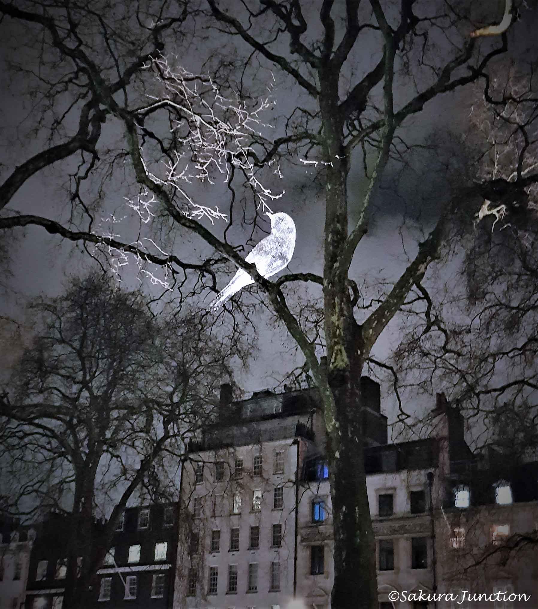A bird in the night sky