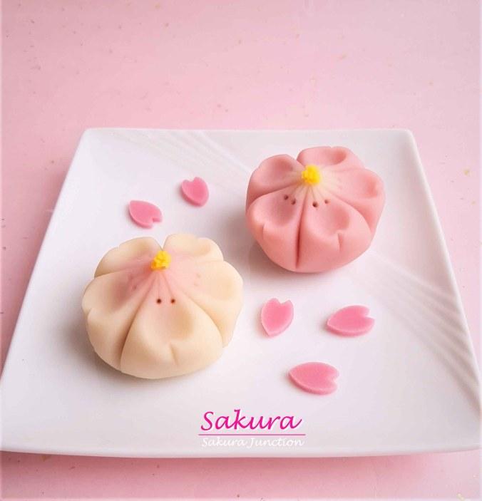 Sakura 19-2