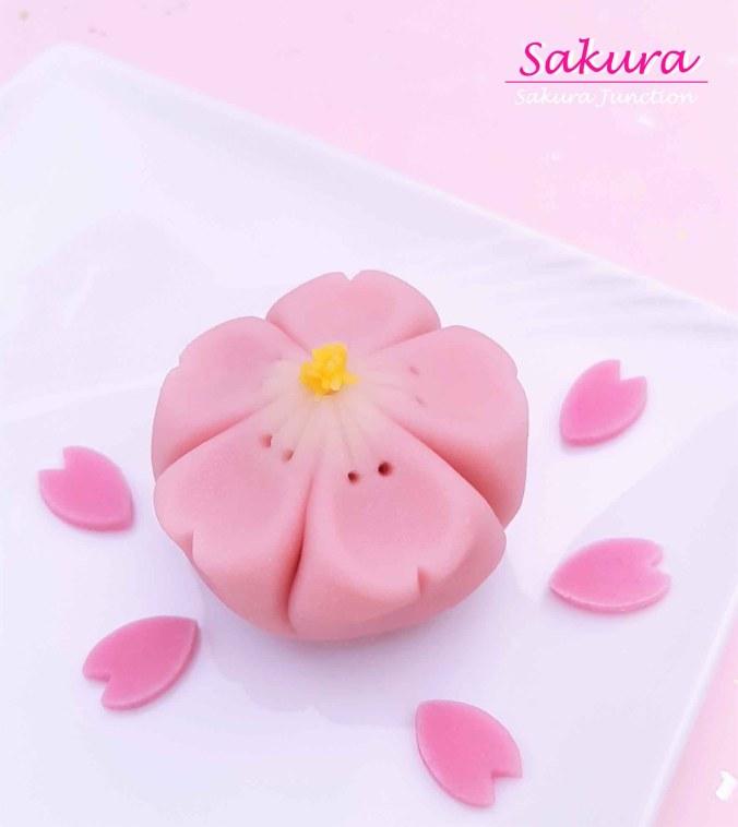 Sakura 19-7