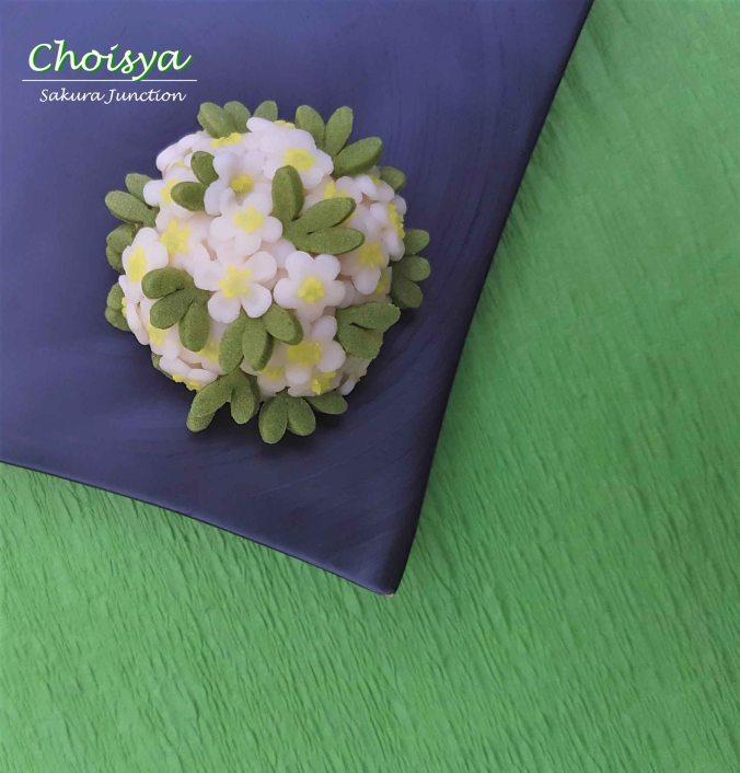 Choisya1