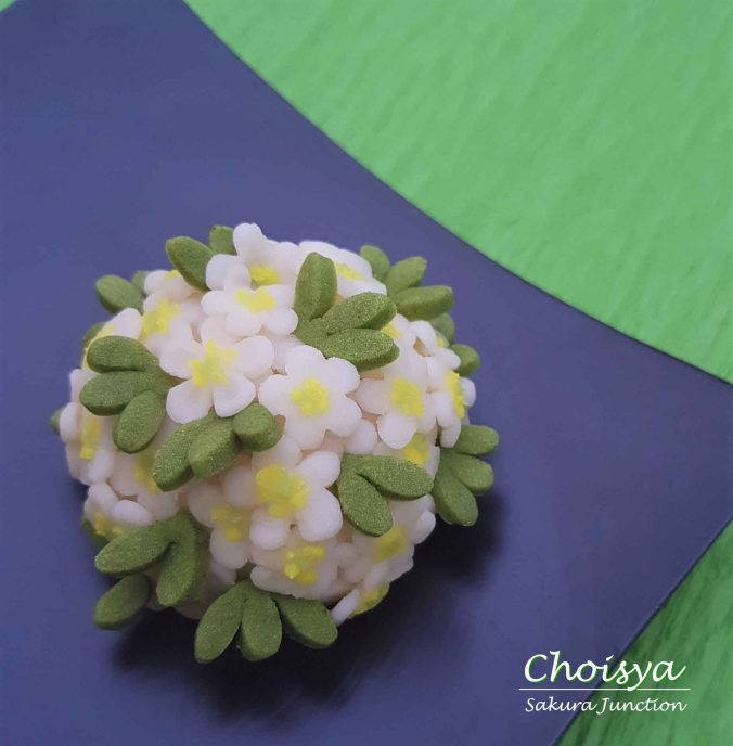 Choisya2