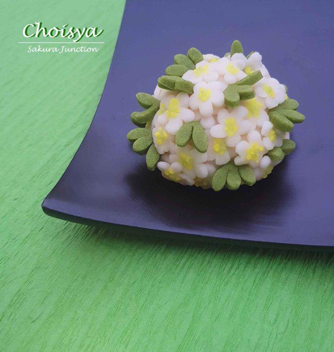 Choisya3