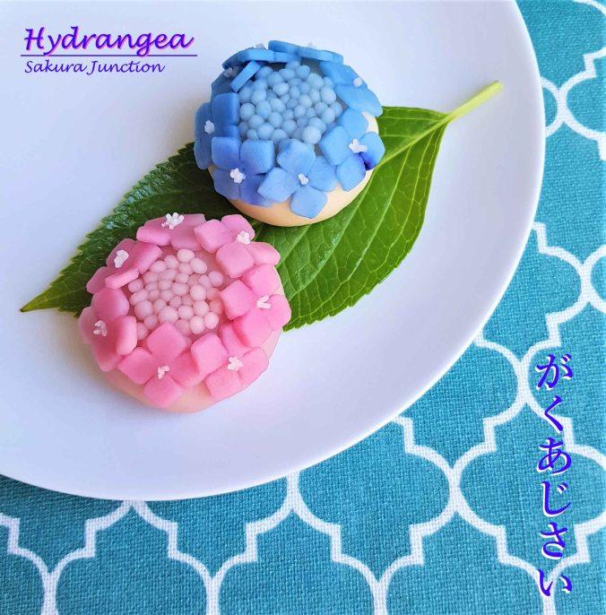 Hydrangea10-1
