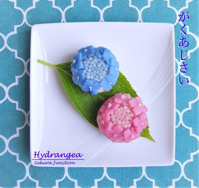 Hydrangea10-3