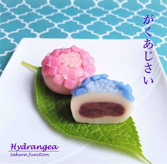 Hydrangea10-4